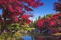 兵庫県 好古園