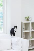 ソファのひじ掛けに座る猫