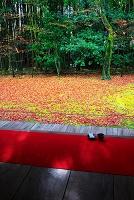 京都 高桐院の紅葉