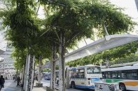千葉駅前 緑化された千葉駅東口広場