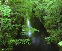 東京都 緑の玉川上水