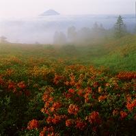 山梨県 甘利山からミツバツツジと富士山