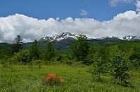 長野県 乗鞍高原 レンゲツツジと乗鞍岳
