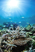 鹿児島県 奄美市 奄美大島 笠利湾のサンゴ礁