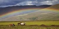 アイスランド・ホースと虹