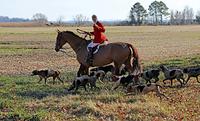 馬に乗って狩猟用ホルンを吹く