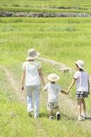山梨県 田んぼの畦道を散歩する日本人親子