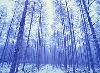 日本の四季 冬