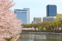 大阪府 春の大阪城公園とOBPビル群