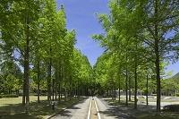 兵庫県 西脇市 日本へそ公園
