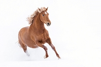 馬  アンダルシアンホース
