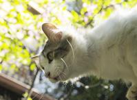 新緑と屋根から下を見る雄猫