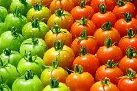 色とりどりのトマト