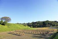 福島県 二本松市 稲の天日干し くいがけ