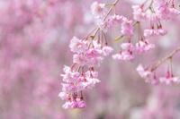 福島県 喜多方市 日中線記念自転車歩行者道