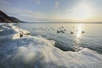 猪苗代湖 しぶき氷 流氷