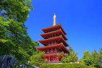 東京都 高幡不動尊 五重塔