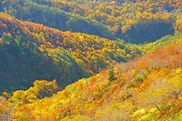 福井県 白山三ノ峰登山道からの紅葉