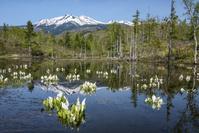 長野県 ミズバショウ咲くどじょう池