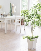 部屋に置かれた観葉植物