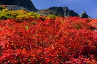 長野県 北アルプス山麓涸沢カール