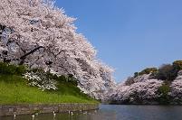 東京都 千代田区 桜
