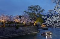 京都府 京都市 岡崎宵桜回廊ライトアップ