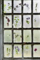 ガラス窓に貼る花