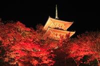 京都府 清水寺 紅葉のライトアップと三重塔