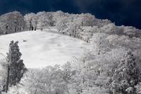 奈良県 三重県 明神平付近の霧氷