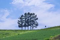 北海道 嵐の木