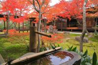 京都府 紅葉の建仁寺
