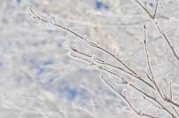 イメージ 枝先についた樹氷