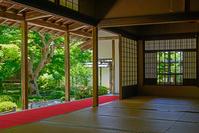 圓光寺 初夏の本堂座敷よりの庭