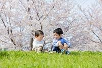 桜の咲く土手で遊ぶ兄と弟