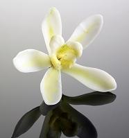 ヴァニラの花