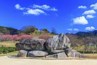 奈良県 石舞台古墳と梅