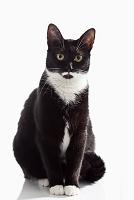 お座りする白黒の猫