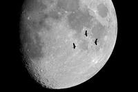 月とクロヅル