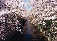 東京都 目黒区