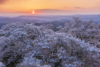 岡山県 弥高山