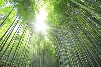京都府 嵐山の竹林の小径