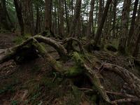 長野県 苔の森