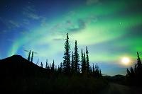 アメリカ 北極圏ワイズマンにて 満月に舞うオーロラ