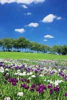 北海道 八絃学園 菖蒲園