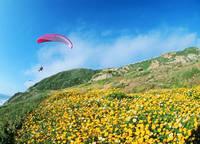 アメリカ合衆国 カリフォルニア州 パシフィカ北端 花畑とパラ...