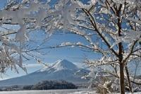 山梨県 大石公園 河口湖と富士山