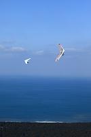 唐津湾とハンググライダー