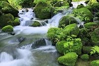 長野県 苔むす新緑の沢