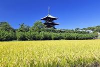奈良県 斑鳩町 田園と法起寺